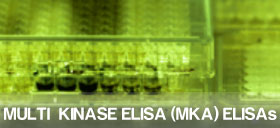 Multi Kinase ELISA Assay from Symansis