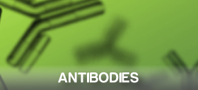 Antibodies from Symansis