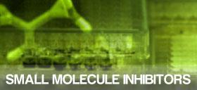 Small Molecule Inhibitors